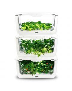 VegeBox Home apilados con vegetales