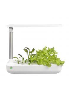 Vegebox Table Vegetales Frontal